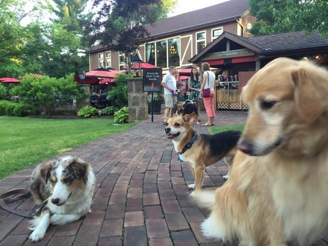 Dog Friendly in Canton