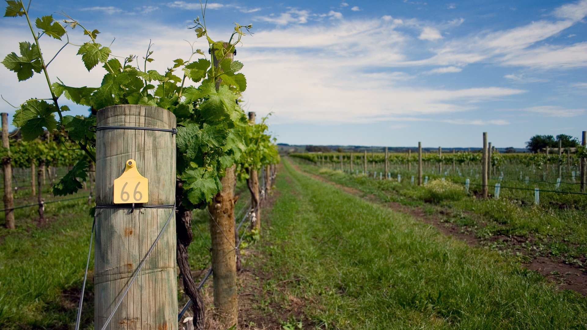 Visit Canton's Wine Country