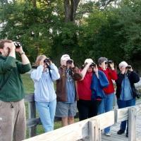 Birding 101 in Stark County