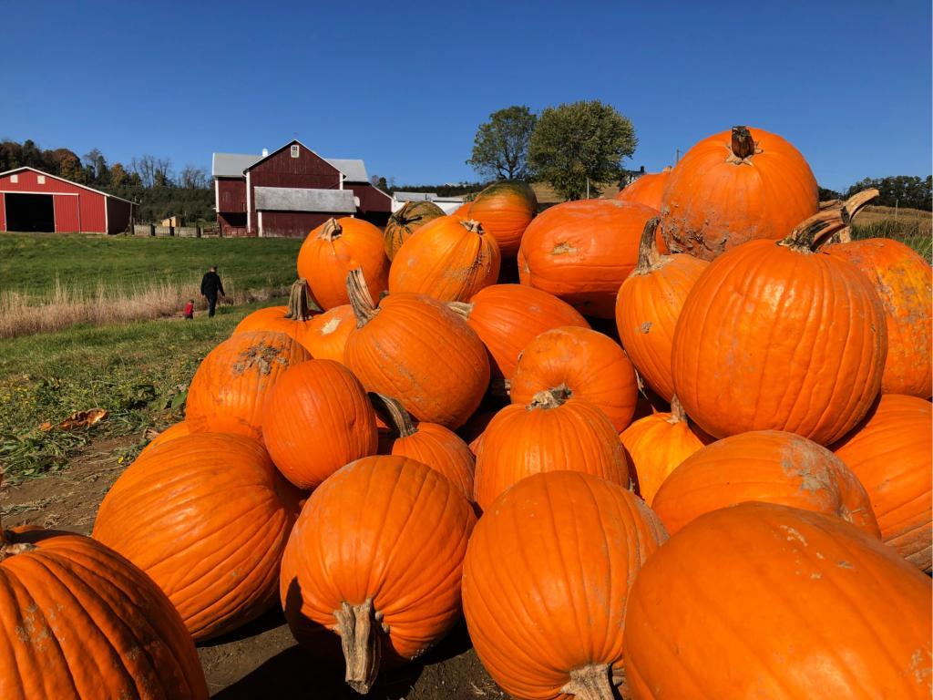 Fall Fun & Pumpkin Pickin