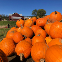 Fall Fun & Pumpkin Pickin